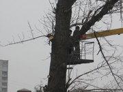 Удаление(спил) и кронирование деревьв