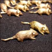 кошелечные мыши